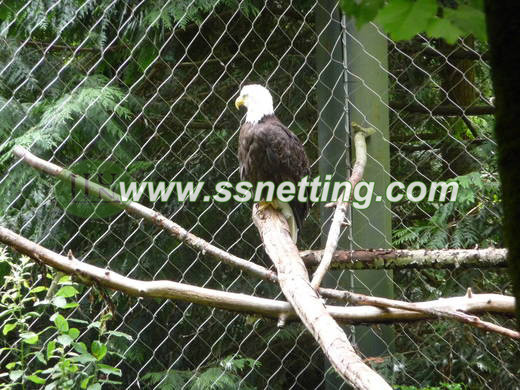 stainless steel bald eagle cage netting, bald eagle netting, eagle bird netting