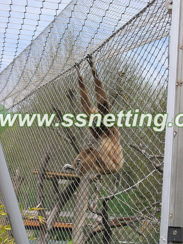In the design of Gorilla jump Cage fence, designers will consider many factors, combined with the orangutan's own characteristics.