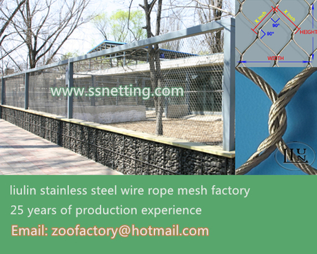 steel wire rope mesh.jpg