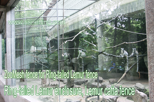 Zoo Mesh fence for Ring-tailed Lemur fence, Ring-tailed Lemur enclosure, Lemur catta fence