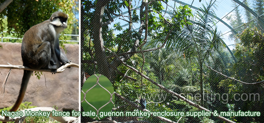 Wire rope netting for Monkey exhibit enclosure 2inch x 2inch