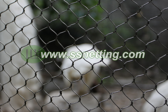 Zoo wire mesh is a very reliable product for small birds cage fencing, such as kinds of small parrots, Swallows, Finches, and so on