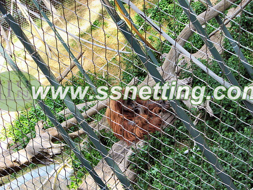 Stainless steel cable barrier mesh for gibbon enclosures protection, gibbon cage fence netting, wire rope netting for orangutans