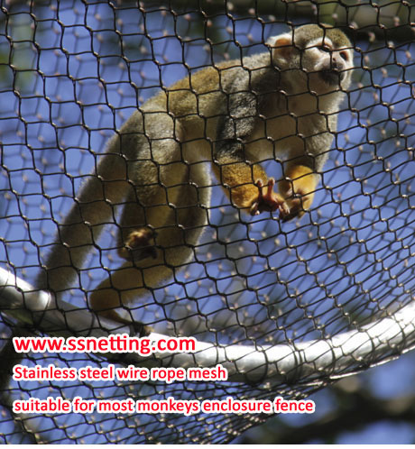 Is the stainless steel wire rope mesh suitable for enclosure of Marmosets monkeys?