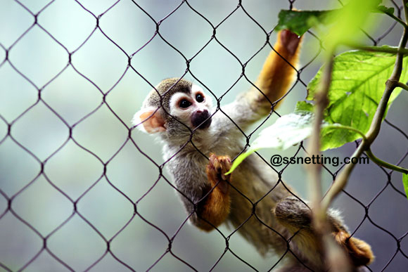 "We are a manufacture specialized in producing the Stainless steel wire rope mesh netting, we said "" ZOO MESH""."