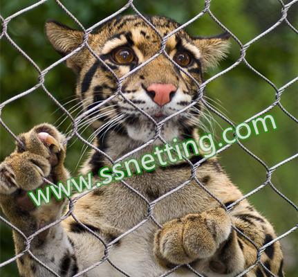 big cat stainless steel cable mesh.jpg