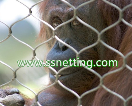 In the Gorilla barrier Cage fencing, with orangutans daily activities of the rocks, habitat, background painted orangutan wild life of the murals
